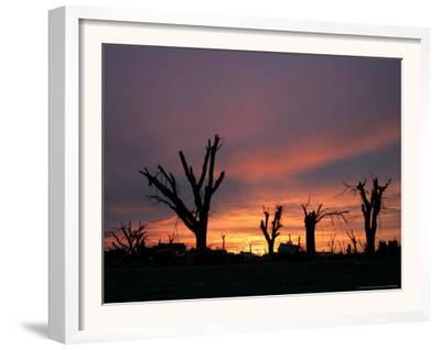 Storm Damaged Trees Silhouetted against the Setting Sun, Greensburg, Kansas, c.2007