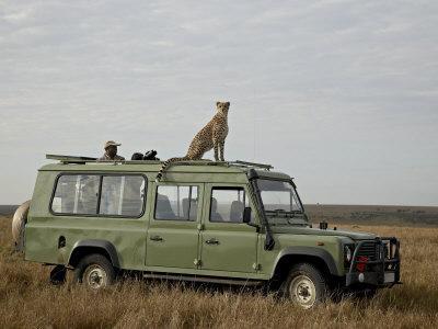 https://imgc.allpostersimages.com/img/posters/cheetah-on-safari-vehicle-masai-mara-national-reserve-kenya-east-africa_u-L-P7NQTC0.jpg?p=0