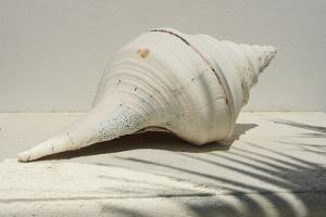Giant Sea Shell by Chel Beeson