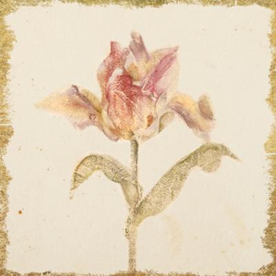 Vintage Zoomer Schoon Tulip Crop by Cheri Blum