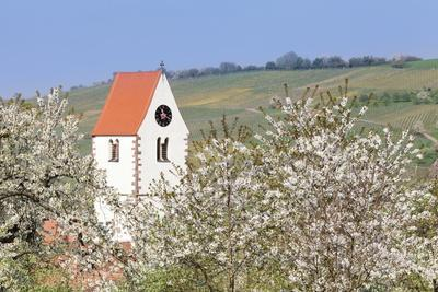 https://imgc.allpostersimages.com/img/posters/cherry-blossom-in-the-eggenen-valley-and-church-tower-of-obereggen_u-L-PQ8O0N0.jpg?artPerspective=n