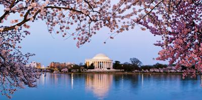 Cherry Blossom Tree with a Memorial in the Background, Jefferson Memorial, Washington Dc, USA
