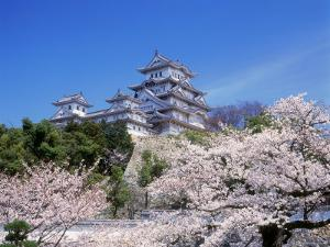 Cherry Blossoms and Himeji Castle