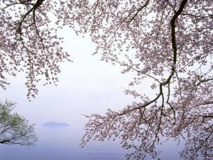 Cherry Blossoms and Lake Biwa