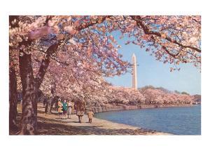 Cherry Blossoms and Washington Monument, Washington, D.C.
