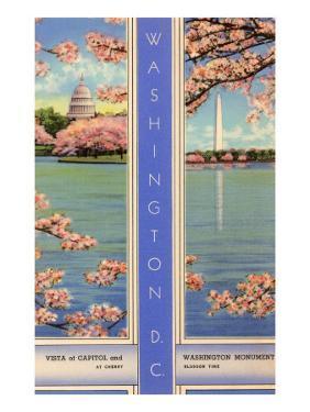 Cherry Blossoms, Capitol, Washington D.C.