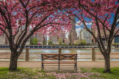 https://imgc.allpostersimages.com/img/posters/cherry-blossoms-in-nyc_u-L-Q1CABP60.jpg?artPerspective=n