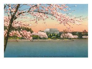 Cherry Blossoms, Lincoln Memorial, Washington D.C.