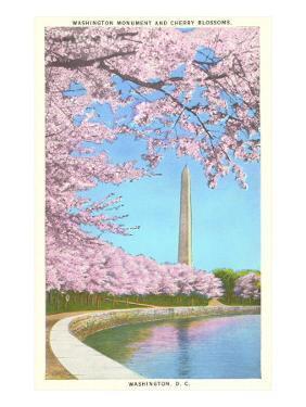 Cherry Blossoms, Washington Monument, Washington D.C.