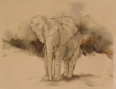 An Elephant Angle