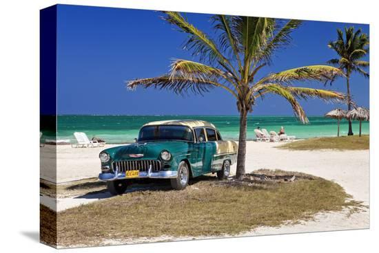 Chevrolet Classic Car under a Palm Tree on the Beach of the Island of Cayo Coco, Cuba--Stretched Canvas Print