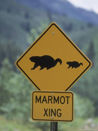 Marmot Crossing Sign, Aspen, CO by Cheyenne Rouse