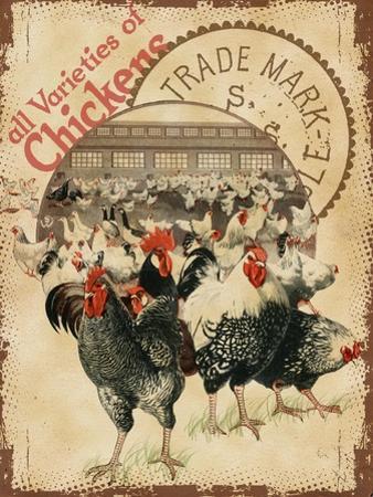 Chicken Varieties