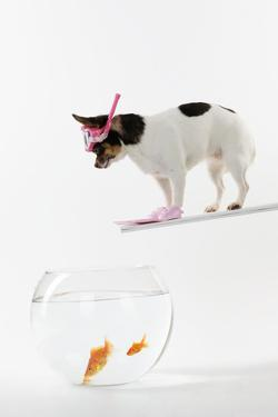 Chihuahua in Scuba Gear over Goldfish Bowl