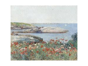 Poppies, Isles of Shoals, America, 1891 by Childe Hassam