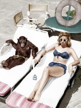 Chimpanzee and a Woman Sunbathing