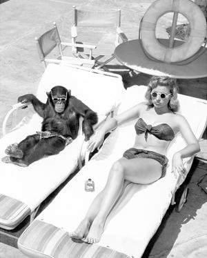 Chimpanzee & Woman Sunbathing
