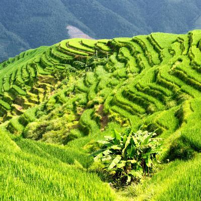 https://imgc.allpostersimages.com/img/posters/china-10mkm2-collection-rice-terraces-longsheng-ping-an-guangxi_u-L-PZ7CMD0.jpg?p=0