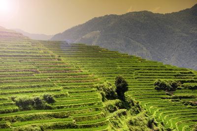 https://imgc.allpostersimages.com/img/posters/china-10mkm2-collection-rice-terraces-longsheng-ping-an-guangxi_u-L-PZ7D8Q0.jpg?p=0