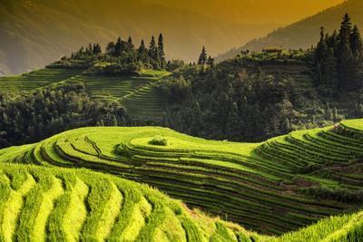 https://imgc.allpostersimages.com/img/posters/china-10mkm2-collection-rice-terraces-longsheng-ping-an-guangxi_u-L-PZ7DDH0.jpg?p=0