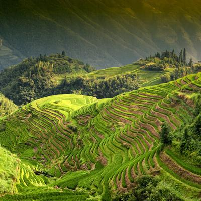 https://imgc.allpostersimages.com/img/posters/china-10mkm2-collection-rice-terraces-longsheng-ping-an-guangxi_u-L-PZ7KYM0.jpg?p=0