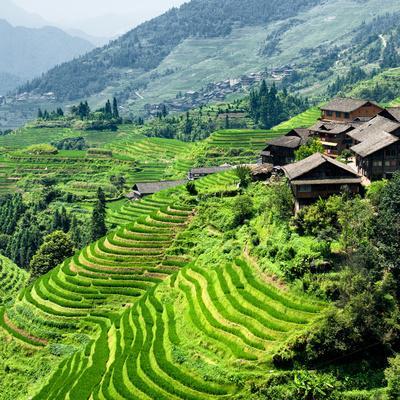 https://imgc.allpostersimages.com/img/posters/china-10mkm2-collection-rice-terraces-longsheng-ping-an-guangxi_u-L-PZ7LL00.jpg?p=0