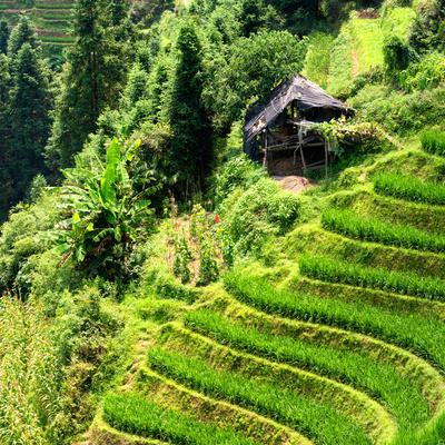 https://imgc.allpostersimages.com/img/posters/china-10mkm2-collection-rice-terraces-longsheng-ping-an-guangxi_u-L-PZ7MSI0.jpg?p=0