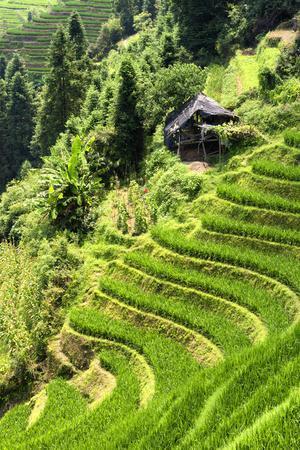 https://imgc.allpostersimages.com/img/posters/china-10mkm2-collection-rice-terraces-longsheng-ping-an-guangxi_u-L-PZ7N260.jpg?p=0