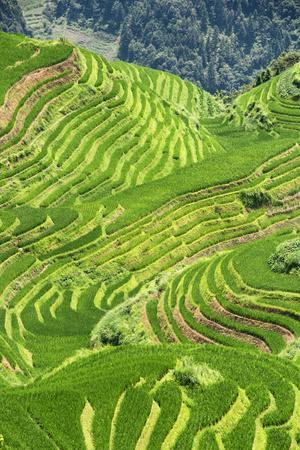 https://imgc.allpostersimages.com/img/posters/china-10mkm2-collection-rice-terraces-longsheng-ping-an-guangxi_u-L-PZ7NR50.jpg?p=0