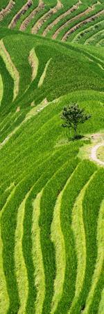 https://imgc.allpostersimages.com/img/posters/china-10mkm2-collection-rice-terraces-longsheng-ping-an-guangxi_u-L-PZ7ODE0.jpg?p=0