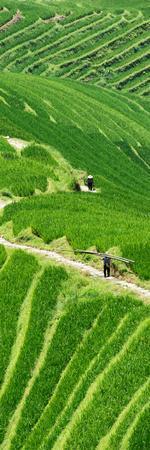 https://imgc.allpostersimages.com/img/posters/china-10mkm2-collection-rice-terraces-longsheng-ping-an-guangxi_u-L-PZ7OXA0.jpg?p=0