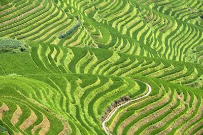 https://imgc.allpostersimages.com/img/posters/china-10mkm2-collection-rice-terraces-longsheng-ping-an-guangxi_u-L-PZ7PKX0.jpg?p=0