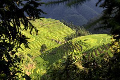 https://imgc.allpostersimages.com/img/posters/china-10mkm2-collection-rice-terraces-longsheng-ping-an-guangxi_u-L-Q11NBZ30.jpg?p=0