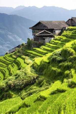 https://imgc.allpostersimages.com/img/posters/china-10mkm2-collection-rice-terraces-longsheng-ping-an-guangxi_u-L-Q11NBZX0.jpg?p=0