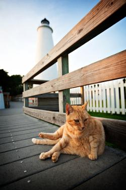 A Cat Lounges in Front of the Ocracoke Lighthouse in North Carolina by Chris Bickford