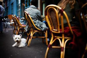 A Little Dog Sits Outside a Restaurant in Paris, France by Chris Bickford