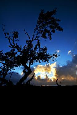A Lonely Tree Rises from the Harsh Lava of Central Hawaii by Chris Bickford