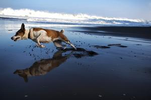 A pet dog enjoys the good life on a Hawaii Island beach. by Chris Bickford