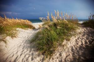 Dunes on the Beach in Cape Hatteras National Seashore in North Carolina by Chris Bickford