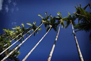 Palm Trees Along the Coast in Hilo on the Big Island of Hawaii by Chris Bickford