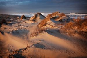 Sand Dunes Ripple across the Outer Banks of North Carolina by Chris Bickford