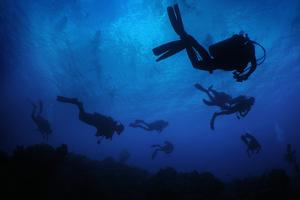 Scuba Divers Swim in the Ocean Off of the Cayman Islands in the Caribbean by Chris Bickford