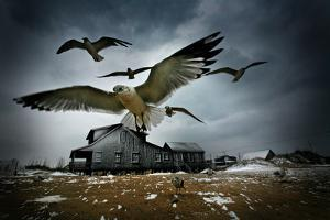 Seagulls Fly over a House on a Wintery Day in the Outer Banks of North Carolina by Chris Bickford