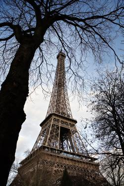 The Famous Eiffel Tower Framed by Trees in Paris, France by Chris Bickford