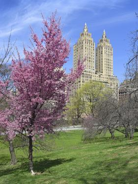 Central Park Spring Colors by Chris Bliss