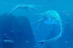 Elasmosaurus Marine Reptiles by Chris Butler