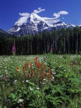 Mount Robson, 3954 M, Highest Peak in Canadian Rockies, British Columbia, Canada. by Chris Cheadle