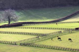 Fields and Fences by Chris Conway
