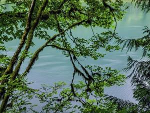 Botanical Arrangement 6 by Chris Dunker
