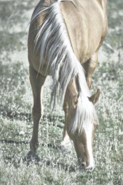 Horse Blonde Grazing by Chris Dunker